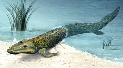 рыбоног