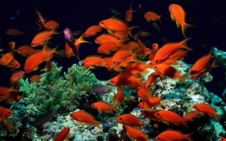 aквариумные рыбки для начинающих