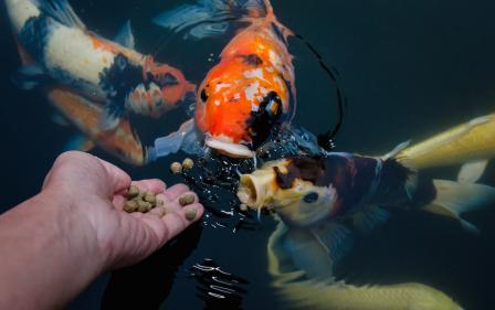 корм для аквариумных рыбок